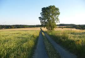 Photo d un chemin